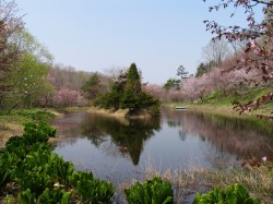 中央農園風景