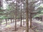 視察中の森林