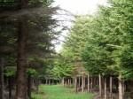視察中の森林2