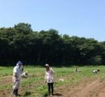 草刈り会3