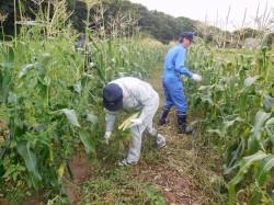 収穫風景3
