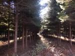 作業を終えた森林